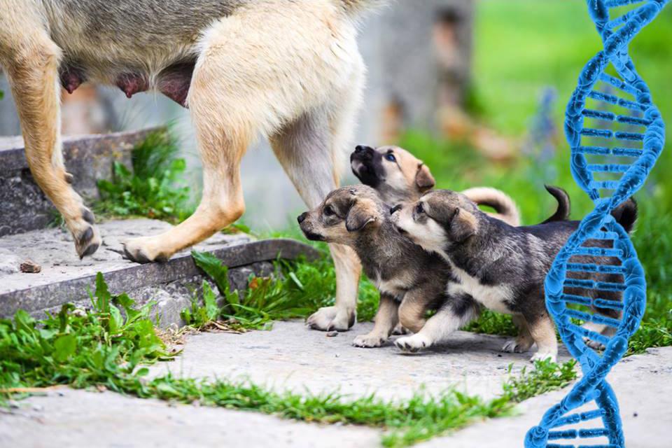 erfelijke ziektes honden